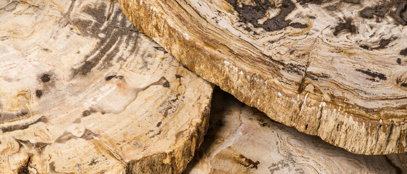 Petrified wood detail